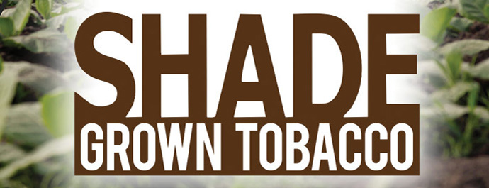 Shade Grown Tobacco