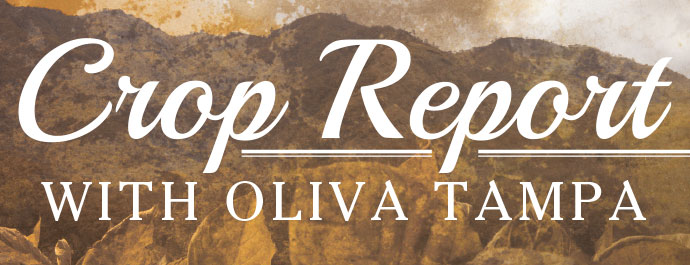 Crop Report with Oliva Tampa